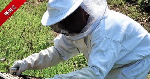 蜂駆除するスタッフ