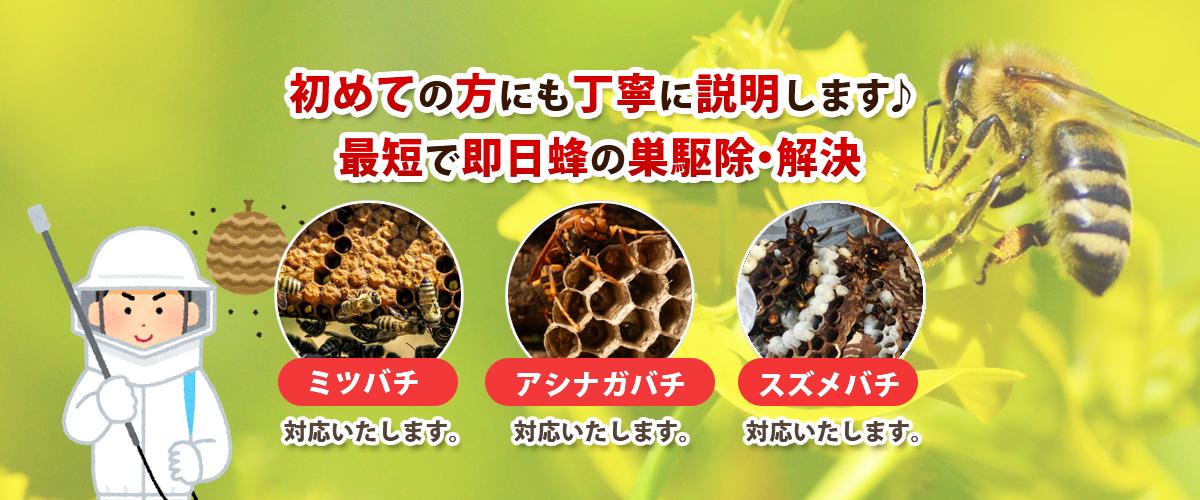 初めての方にも丁寧に説明します♪最短で即日蜂の巣駆除・解決 ミツバチ・アシナガバチ・スズメバチ対応いたします。